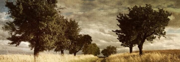 cropped-vintage-trees-facebook-cover-timeline-banner-for-fb1.jpg